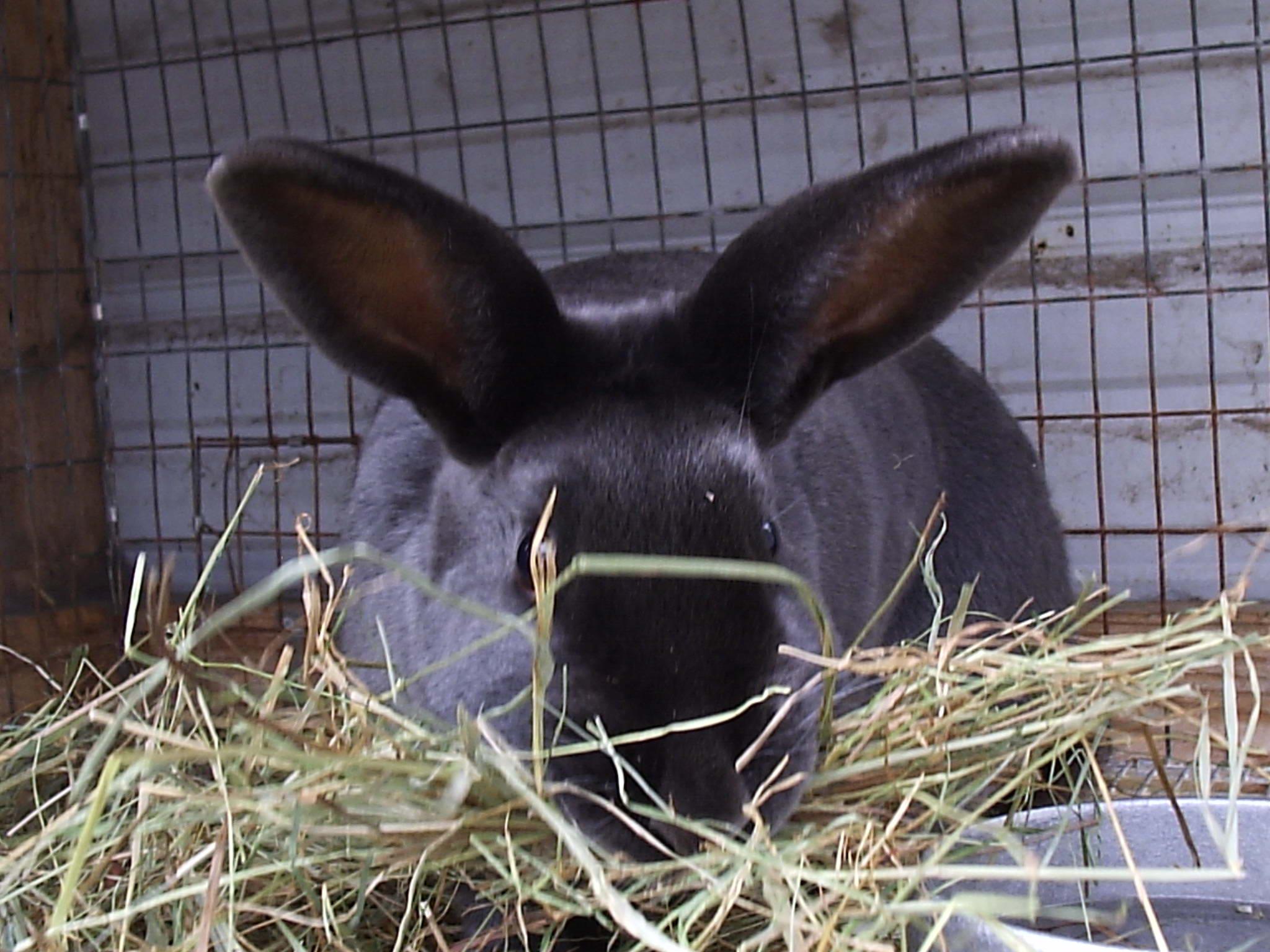nestbox rise and shine rabbitry